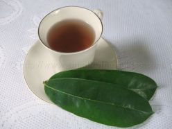 Graviola,guanabana(Soursop) Tea Cures Cancer