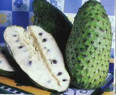 cancer curing fruit (soursop graviola)